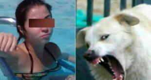 Nữ sinh viên bị chó cắn chết trong buổi đi du lịch